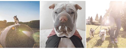 Национальный день собаки 2019 в США