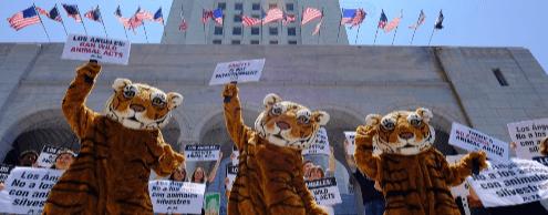 Первым штатом с политикой fur-free стала Калифорния